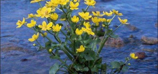 Растения водоемов