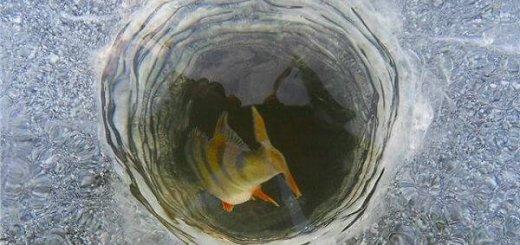 Рыба в пруду зимой
