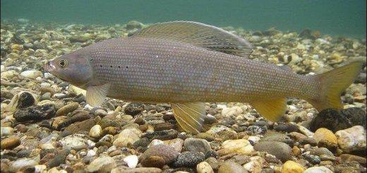 Технология выращивания рыбы