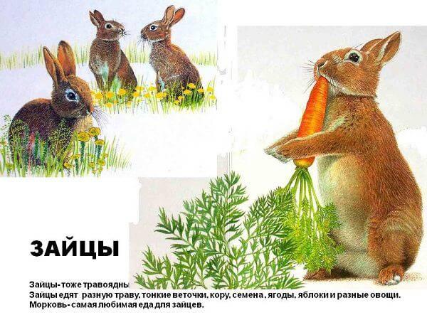 Питание зайца