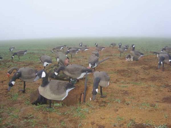 Охота на гусей с использованием профилей