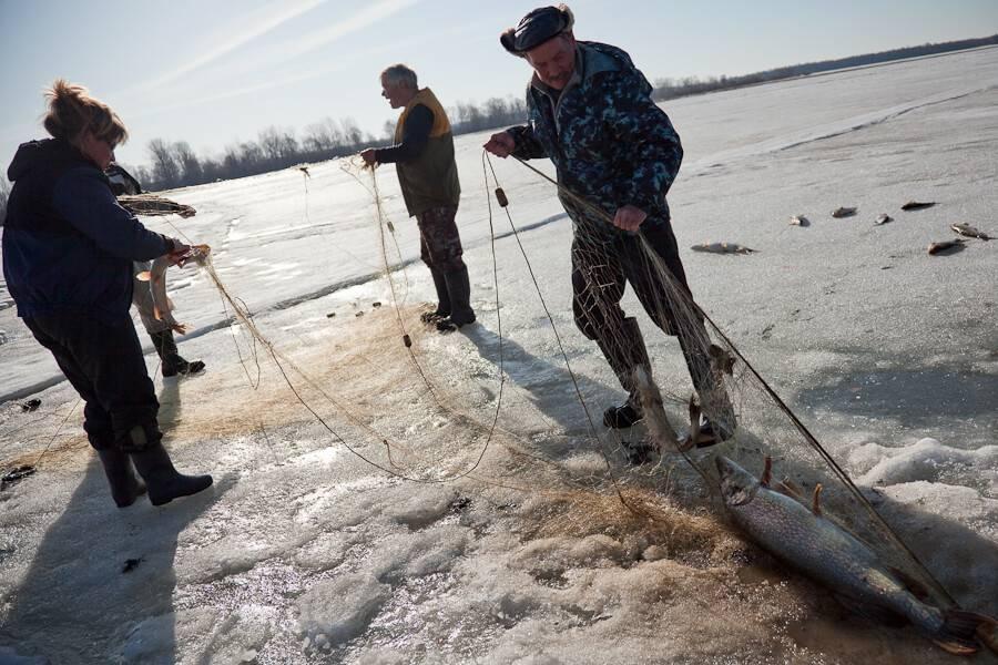 охота на рыбу зимой сетью