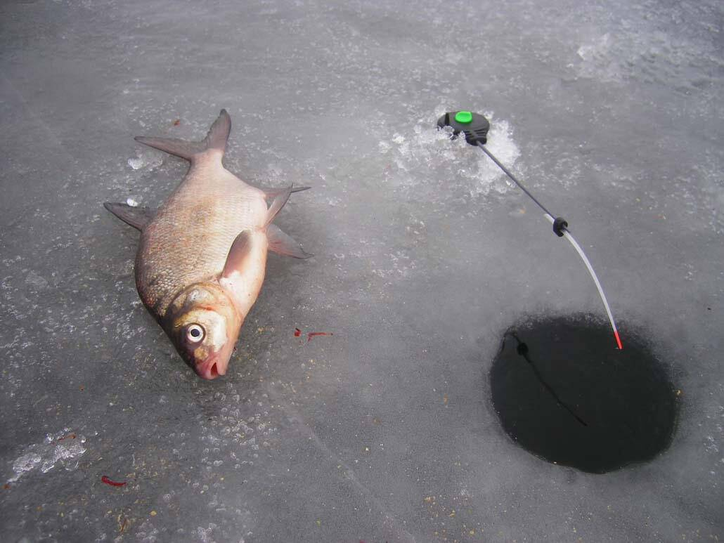 Способы ловли подлещика зимой