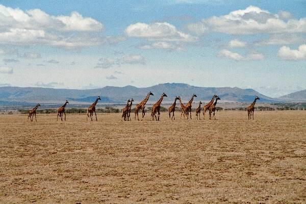 Национальный парк Серенгети
