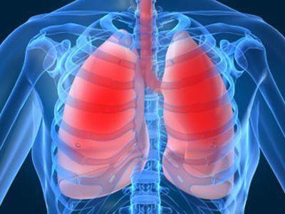 Заболевания органов дыхания и охота