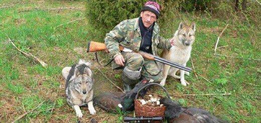 Охота с собаками