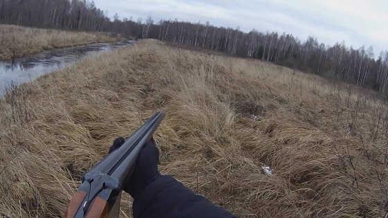 Загонная охота в лесах Беларуси видео