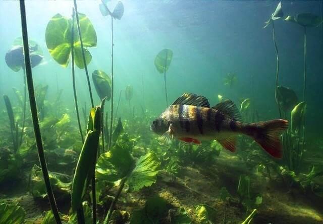 Морская и пресноводная рыбалка: особенности и отличии