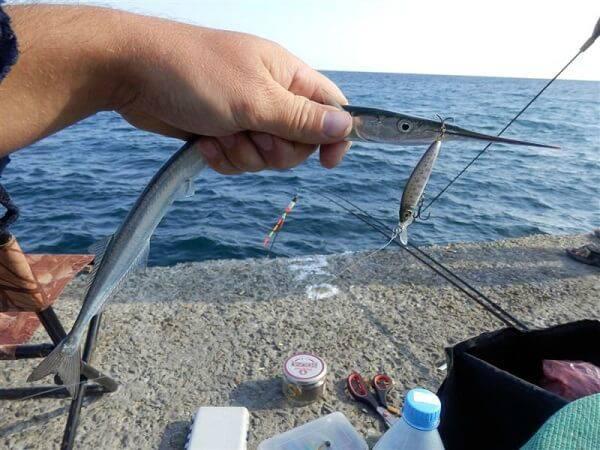 Картинки по запросу рыбалка в июле сарган