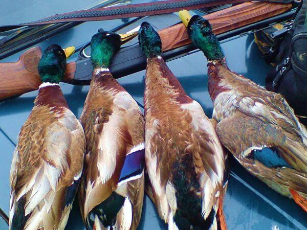 Весенняя охота на птиц