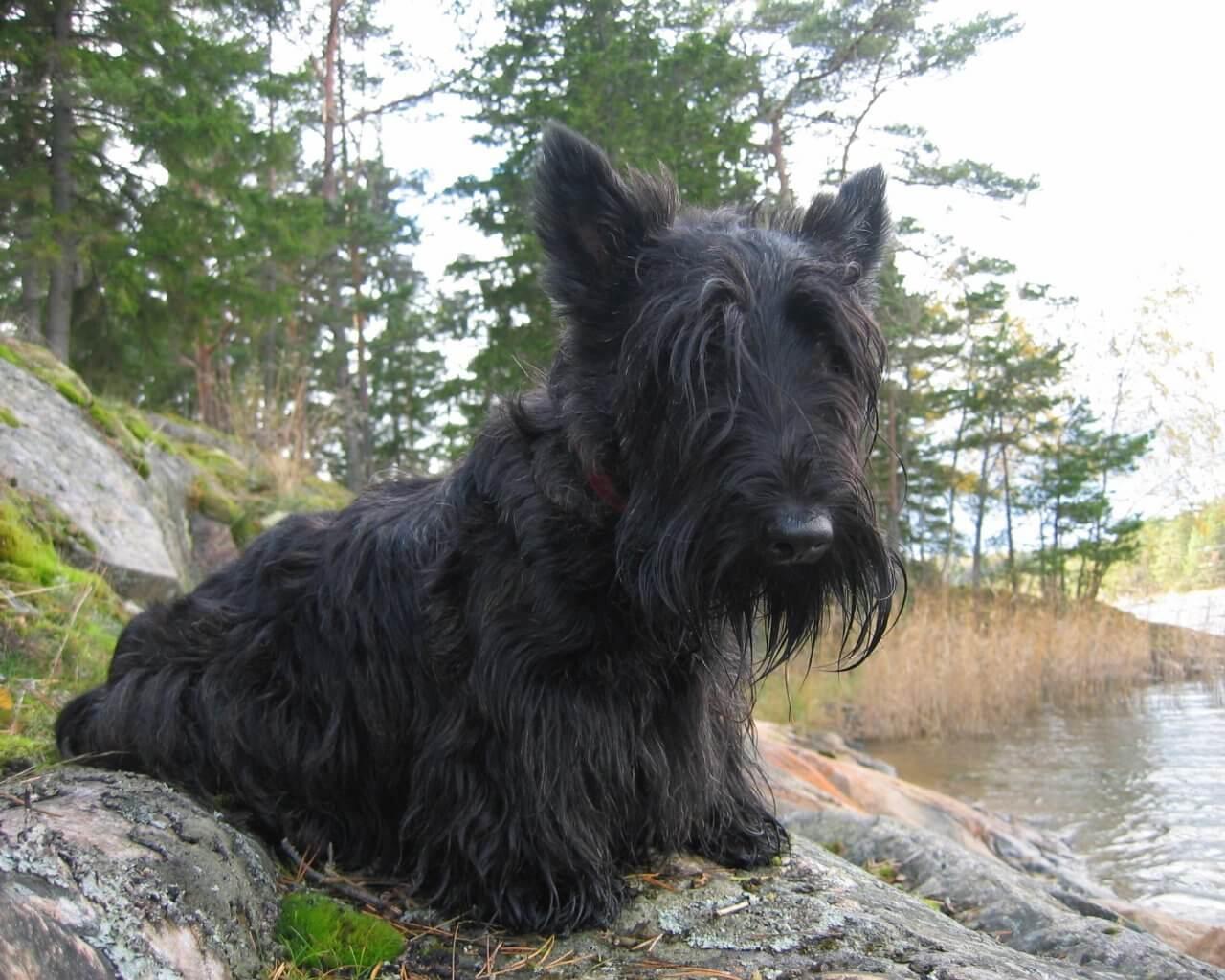 Норные собаки - Охота и рыбалка в России и за рубежом