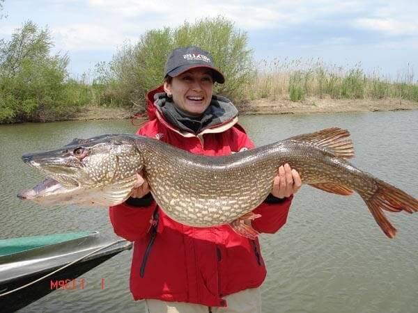 охота и рыбалка ловля толстолобика