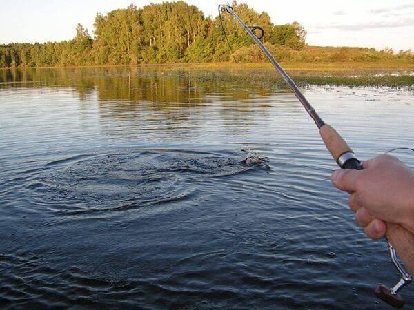 когда можно ловить рыбу на водоемах