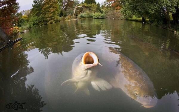ловля в пруду в мае