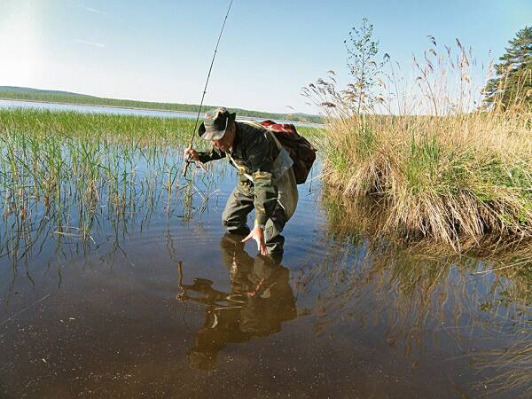 Как ловить плотву