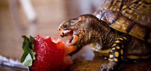 Что едят животные