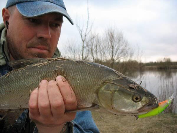рыбалка весной видео толстолоб