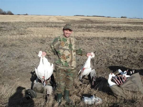 Охота на белых гусей