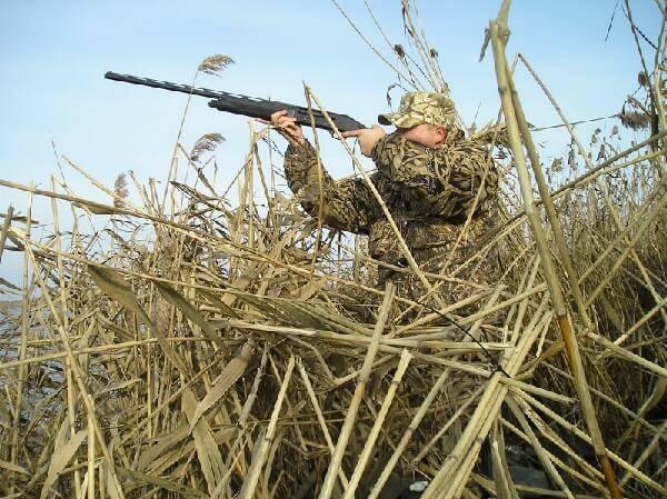 Охота на болотную курочку