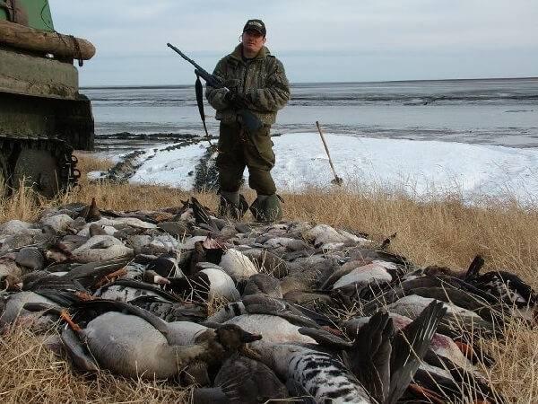 Охота на гусей в Молдове