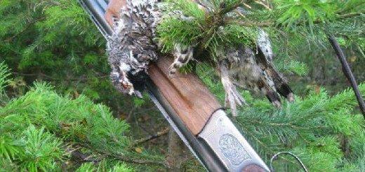 Охота на рябчика