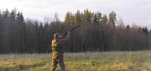 Охота на вальдшнепа видео