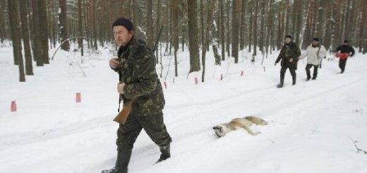 Охота на волка в степи