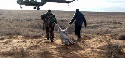 Охота на волков с воздуха