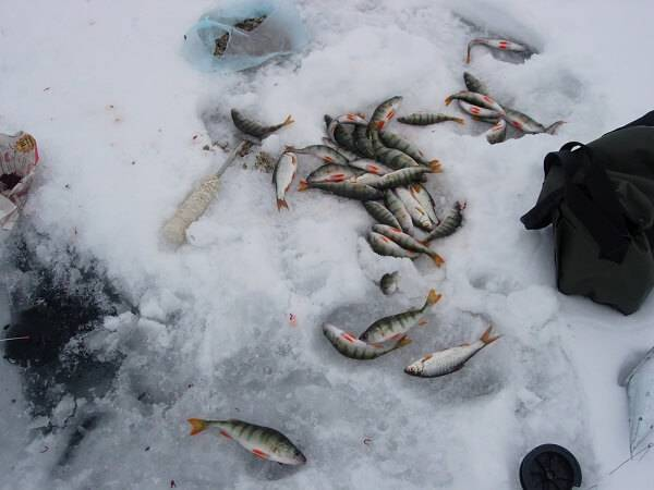 Рыбалка зимой на озеро Плещеево