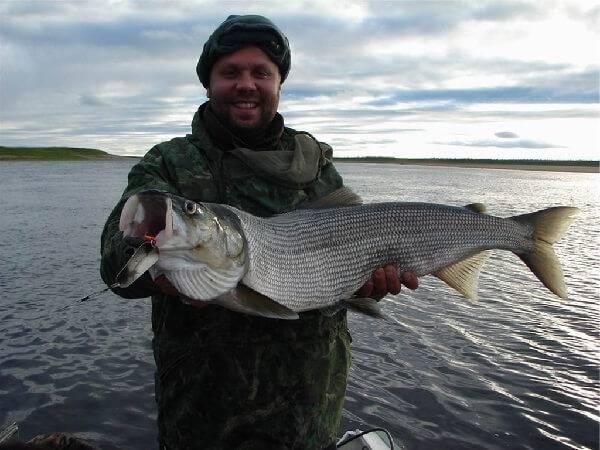 рыболовные туры на нельму