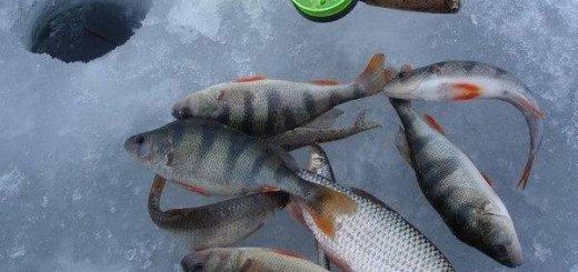 Рыбалка зимой на окуня