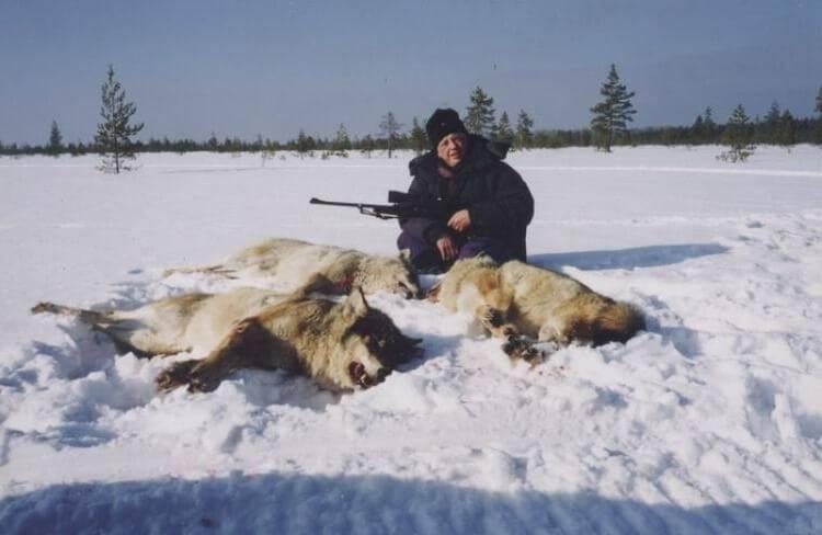 Зимняя охота на волков
