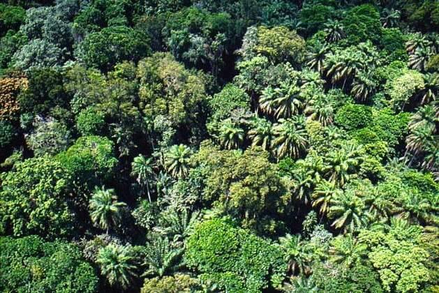 Лес Африки