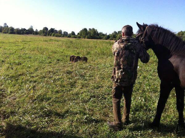 Лошади на охоте