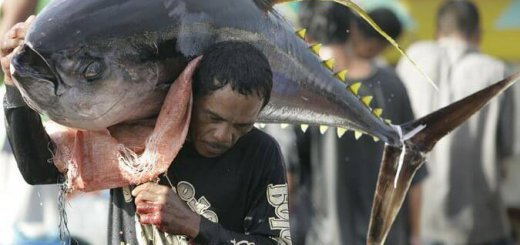 Рыбалка в Японии