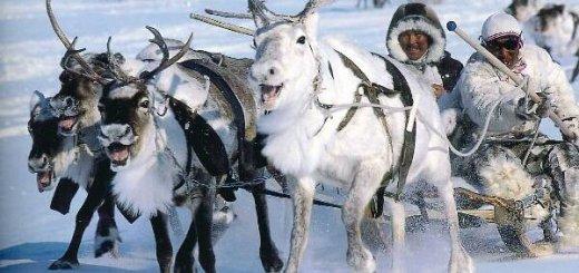 Езда на северных оленях