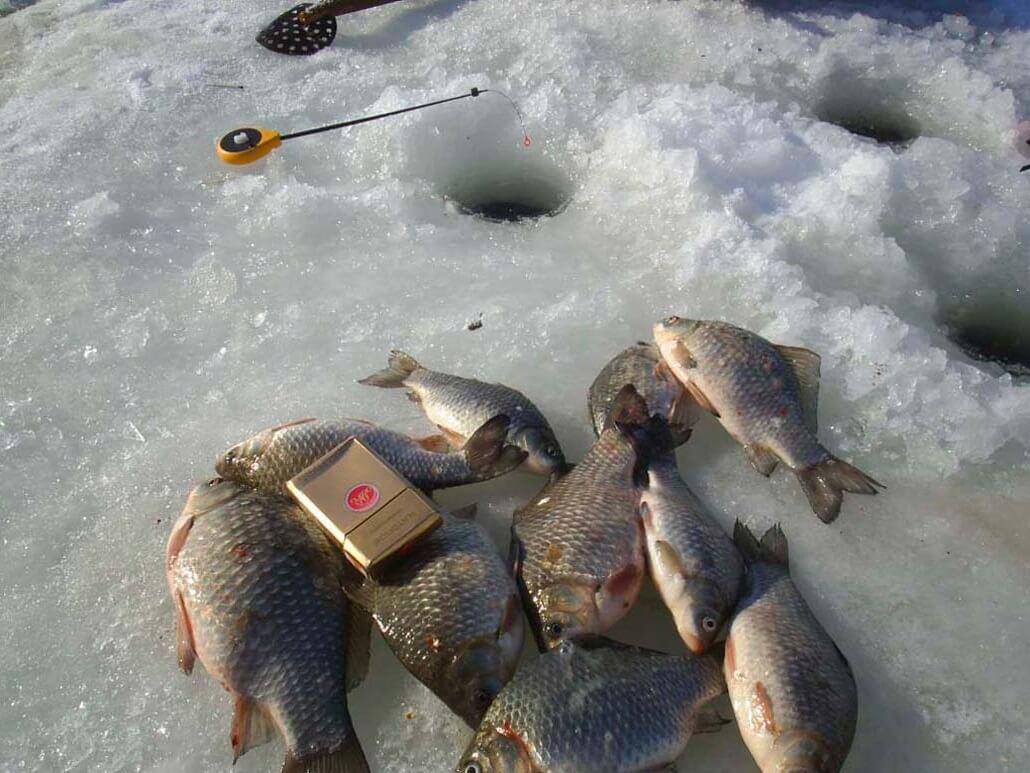 Ловля карася по первому льду