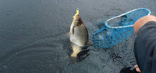 Ловля белой рыбы