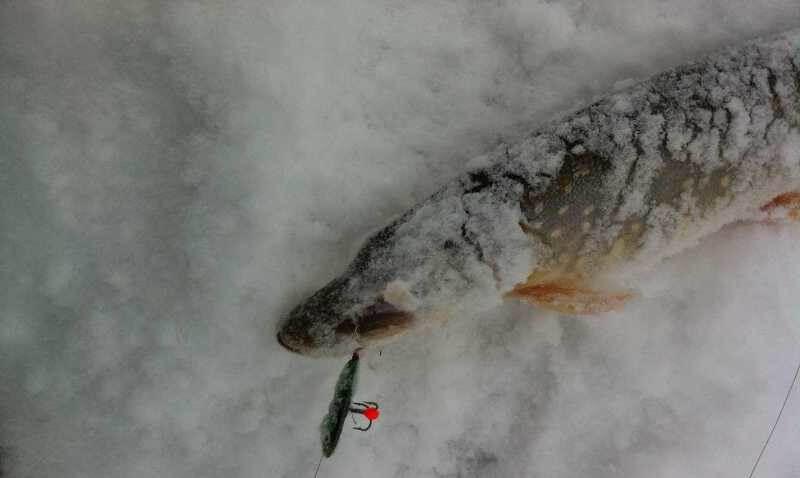 рыбалка на вареного мормыша