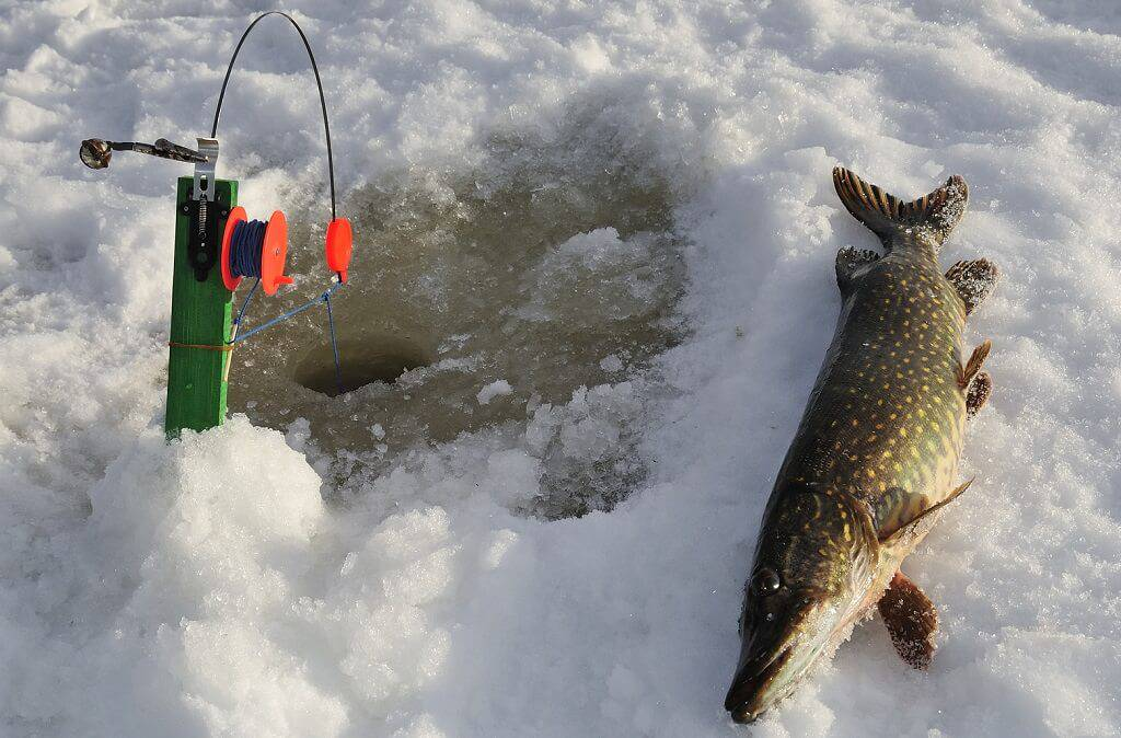 Ловля щуки на Волге зимой
