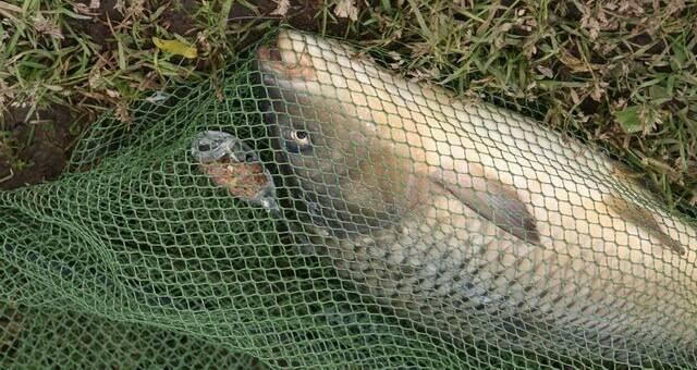 Садок для хранения рыбы