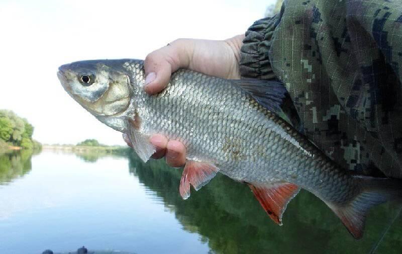 рыбалка ловим язя