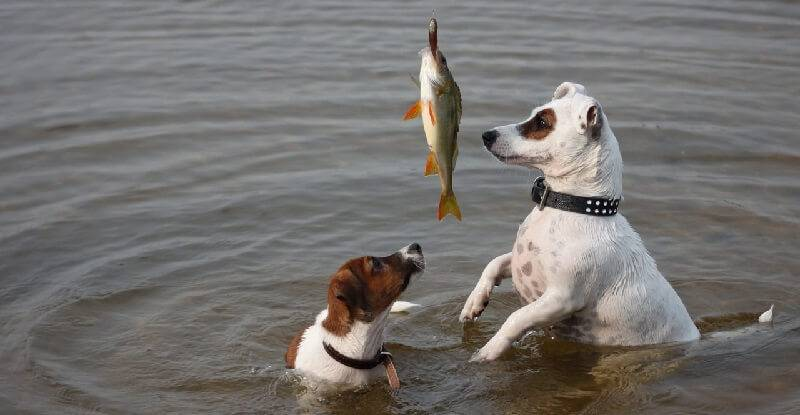 На рыбалку с собакой