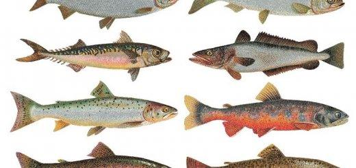 Размер рыб