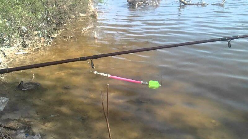 как ловить толстолобика в пруду