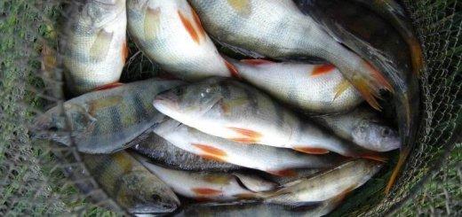 Как сохранить улов