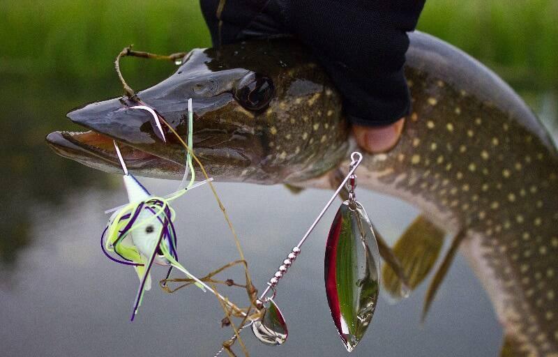 рыбалка на спиннербейт на щуку
