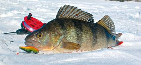 Ловля на зимние раттлины