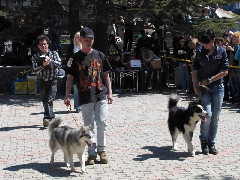 Выставка собак в Крыму