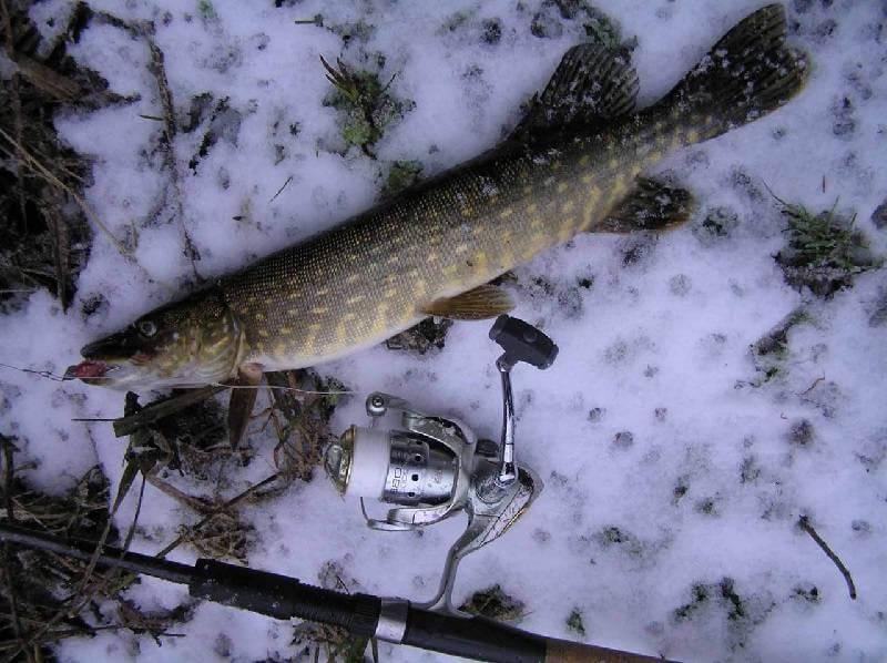 Ловля хищника зимой